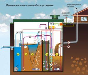 биологическая система
